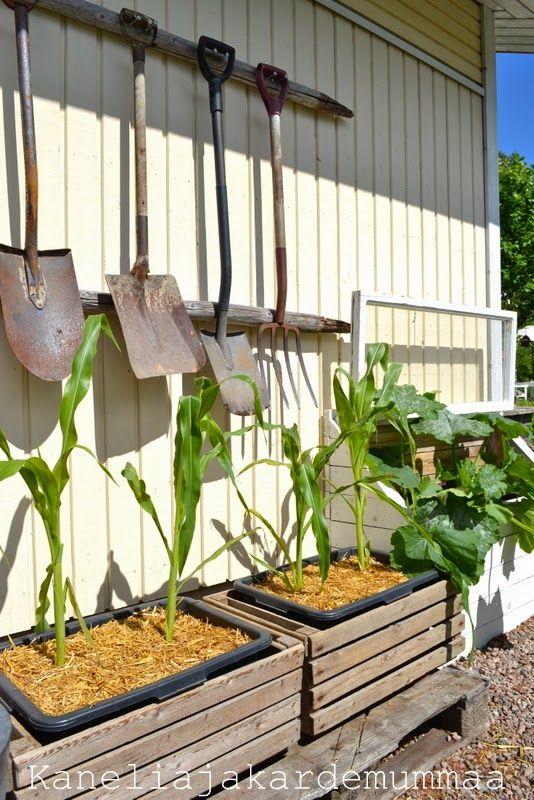 Kanelia ja kardemummaa: kasvihuone