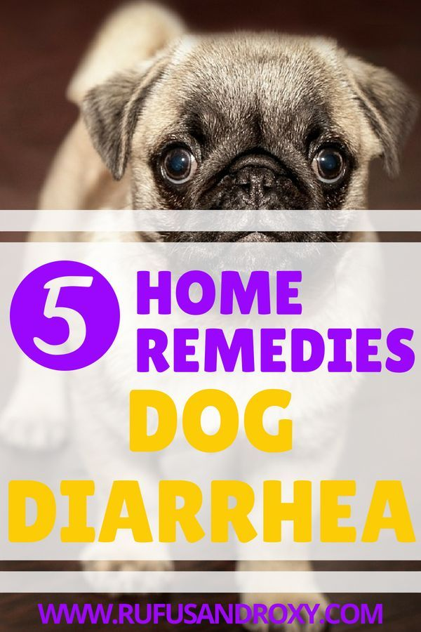 5 Best Dog Diarrhea Home Remedies Dog Diarrhea Remedy Dog