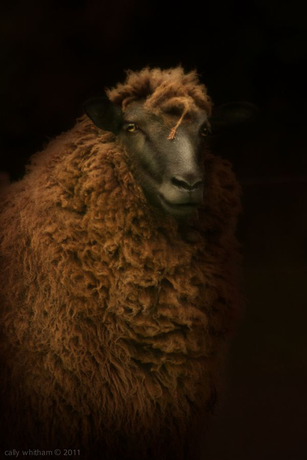 Farm animals photographed in romantic light. Love this!