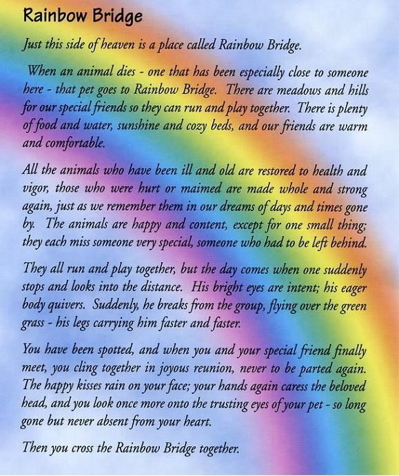 Rainbow Bridge~ Its not a Tattoo but its great to read before you get a memory Tattoo of your dog loss!