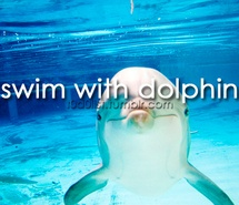 Swim with a Dolphin-MUS DO!