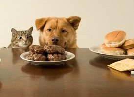 пищевая аллергия у собак и кошек