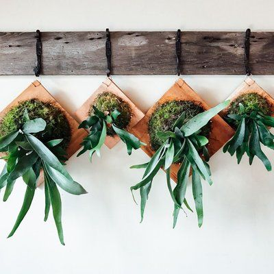 Arrange three or more mounted staghorn ferns on a horizontal wall-mounted coat hook to liven up any space.