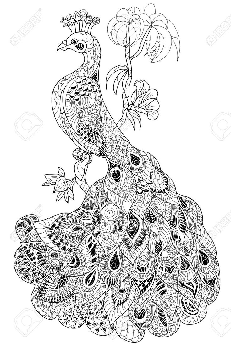 17 Best Images About Zentangle Animals On Pinterest