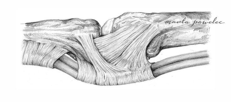 Marta Pawelec medical illustration