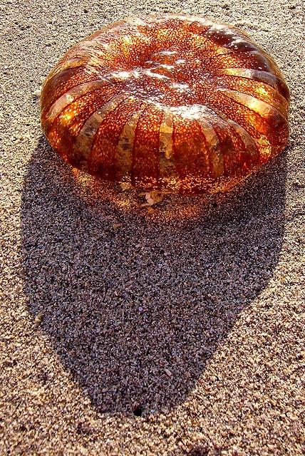Jellyfish. La Portada, Antofagasta, Chile, 2005 // photo by Steffen Sauder