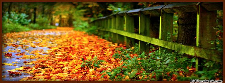 fall cover photos for facebook timeline - Google Search