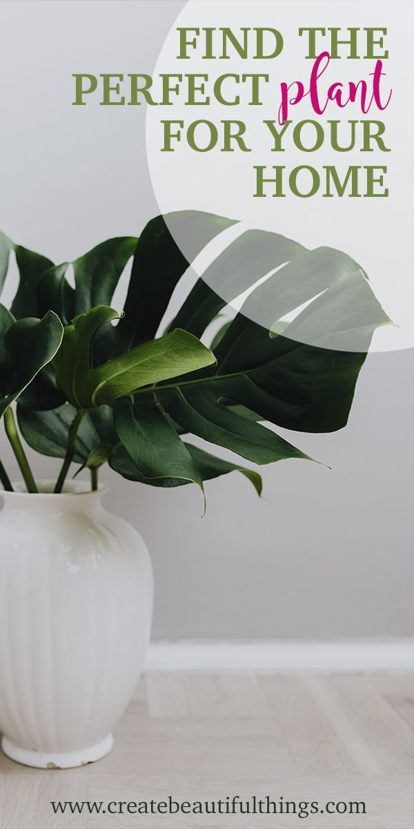 9 Indoor Plants for Your Home & Health