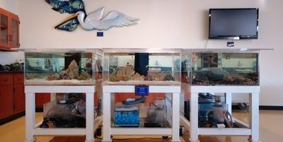 Touch tanks in our Cousteau Center for Marine Studies St. Petersburg FL, Pinellas County | Canterbury School of Florida