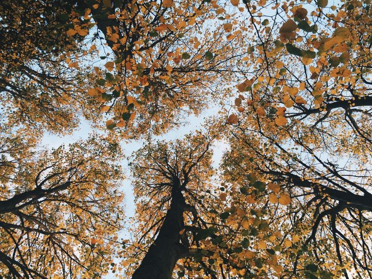 🌞 Get this free picture Oak Tree Forest    🆗 https://avopix.com/photo/12002-oak-tree-forest    #oak #tree #forest #landscape #maple #avopix #free #photos #public #domain