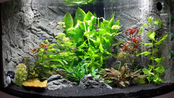 Aquarium Hauptansicht von Juwel Trigon 190