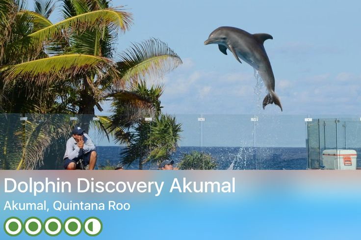 Swim with the dolphins Talum Mexico