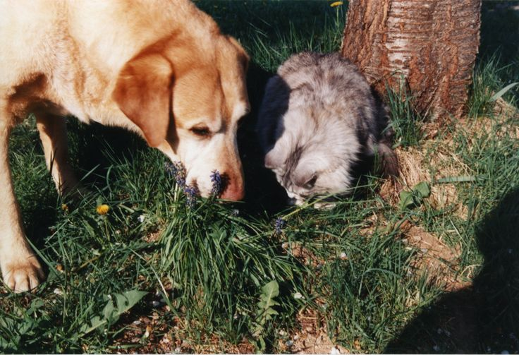 A very old Simba sharing a sniff with Tabitha.