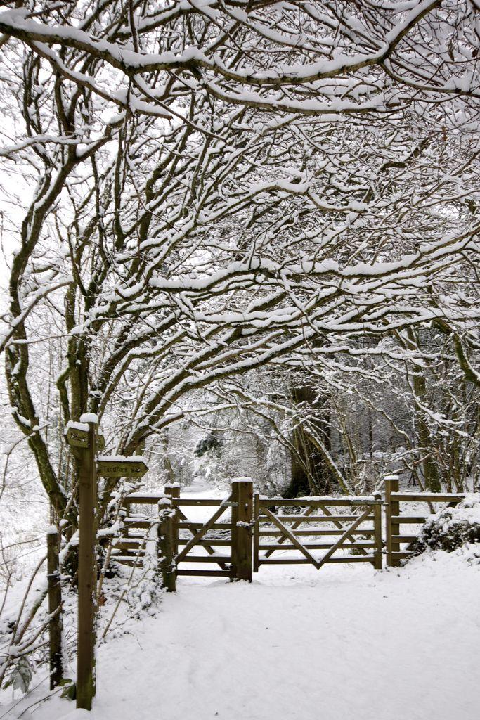 Path Through Winter Woods - Exeter, England, UK