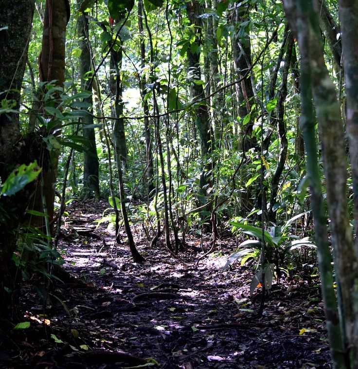 Come and walk with me into the magic of the woods // tortugero, Costa Rica, Rainforest.