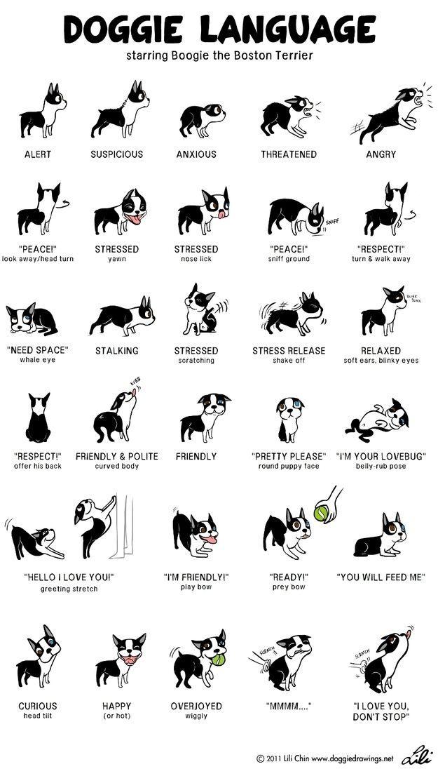 Illustrator Lili Chin produced this wonderful explanation of her dog's body language.
