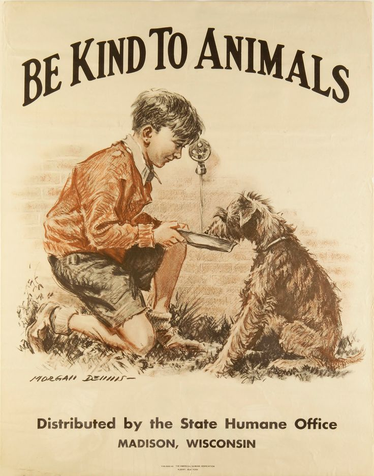 Morgan Dennis was involved in producing the poster for Be Kind to Animals Week® for several years in the early decades of the 20th century including this 1932 poster featuring a young boy kneeling down to offer a drink of water to his canine companion (Airedale!)