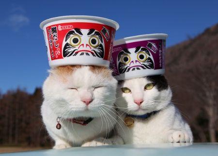 だるま猫 (Daruma Neko)