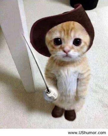 """cat"" https://sumally.com/p/1354726?object_id=ref%3AkwHOAAgj_oGhcM4AFKvm%3Axq9J"