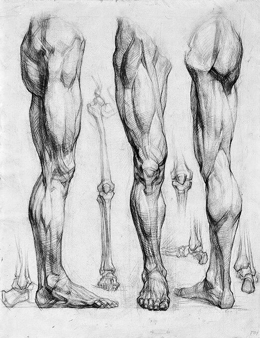 160 Best Study Drawing Images On Pinterest Dibujo Drawing