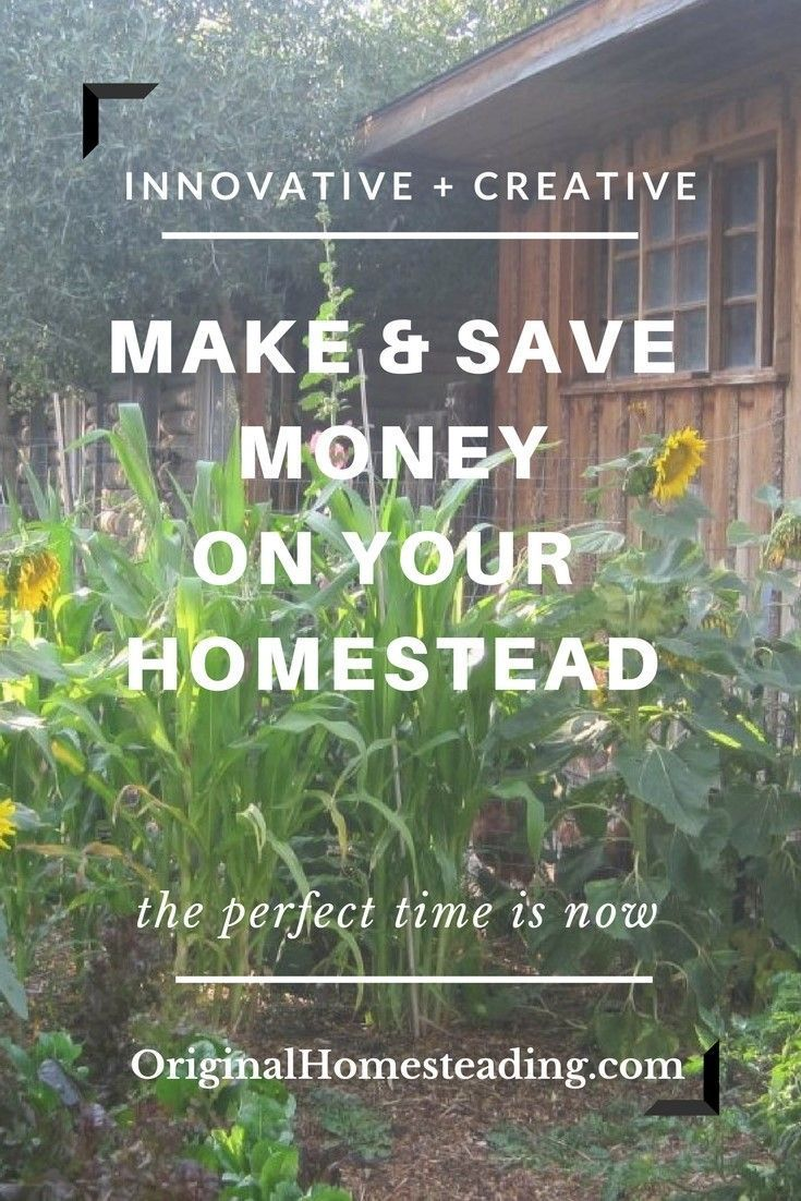 Sometimes we need ideas to start coming up with creative and innovative ways to earn money from our Homestead......here are over 70 ways to get you thinking.......