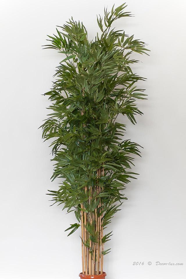 Бамбук японский, 180см.