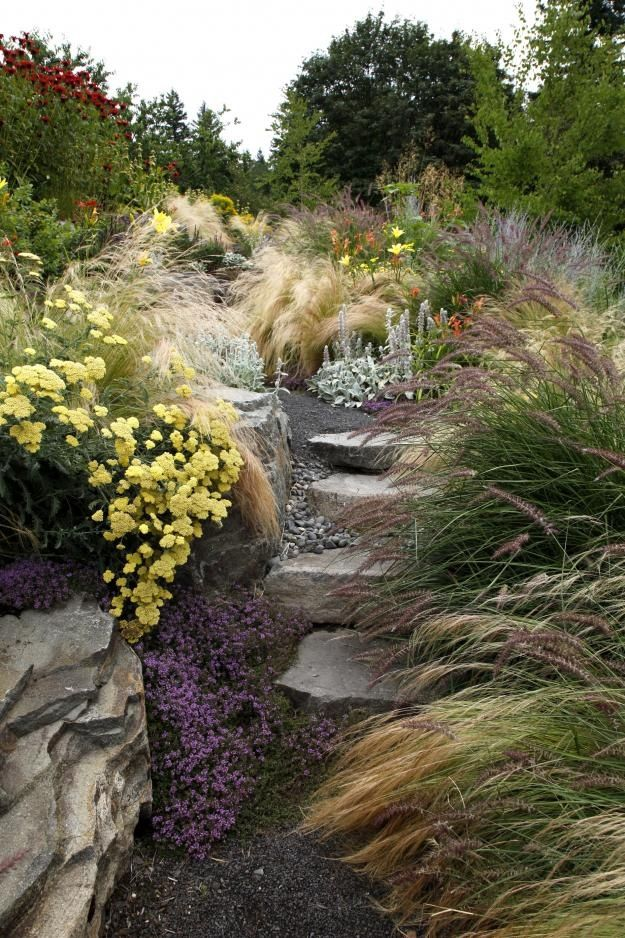 17 best images about rose herb garden on pinterest for Wild grass gardens