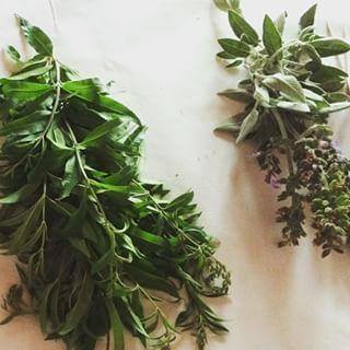 Mejorana. | 16 Plantas para sembrar y cocinar en casa