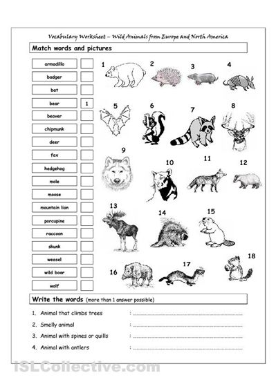 worksheets on europe worksheet wild animals from europe north america worksheet. Black Bedroom Furniture Sets. Home Design Ideas