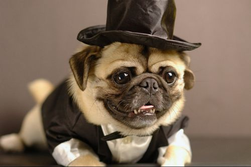 Awesome PUGs do exist!