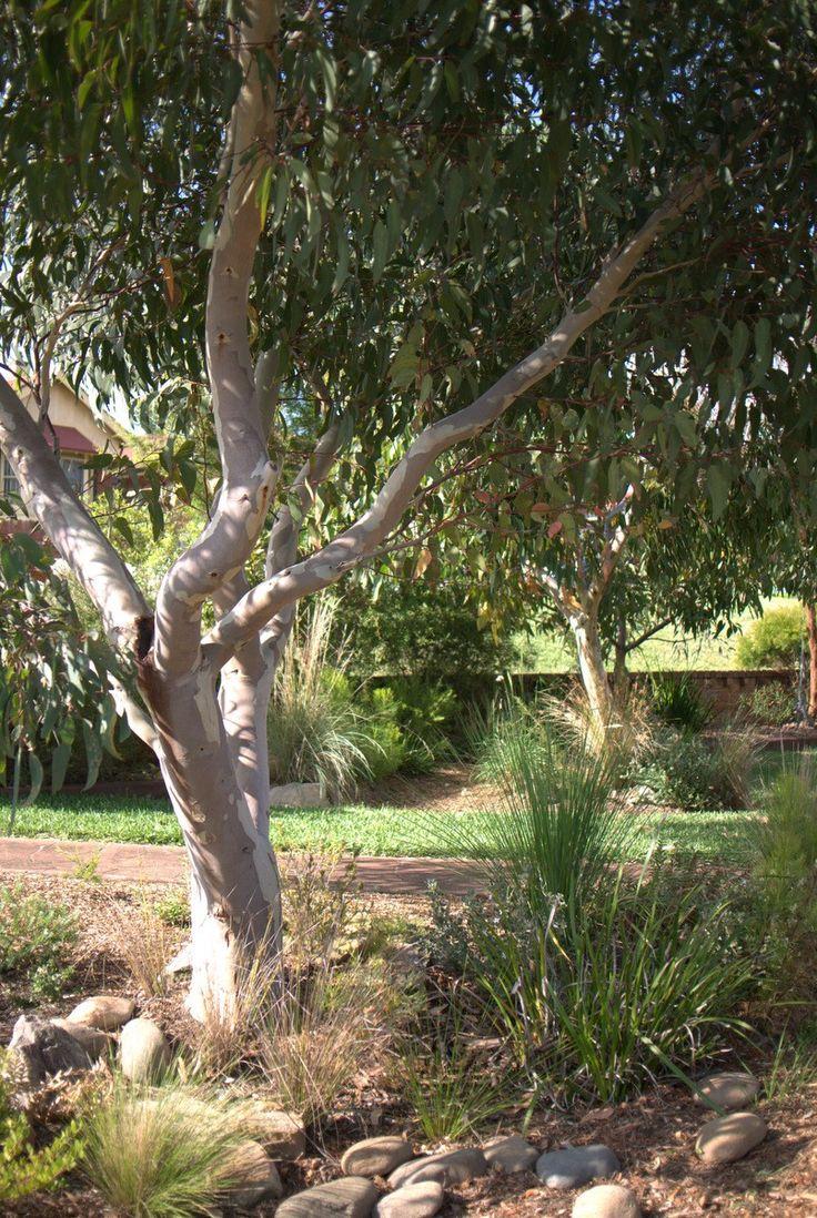 Native front garden