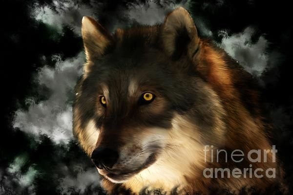 Midnight Stare - wolf digital painting by Tracey Everington