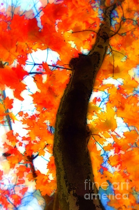 trees: Fall Art, Autumn Leaves, Art Photography, Painting Trees, Autumn Beautiful, Art Ideas, Artists Beautiful, Fabulous Fall, Art Projects