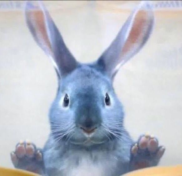 Blue Bunny Ice Cream commercial bunny. He's just so cute.
