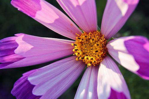 April Birth Flower - Birthstones