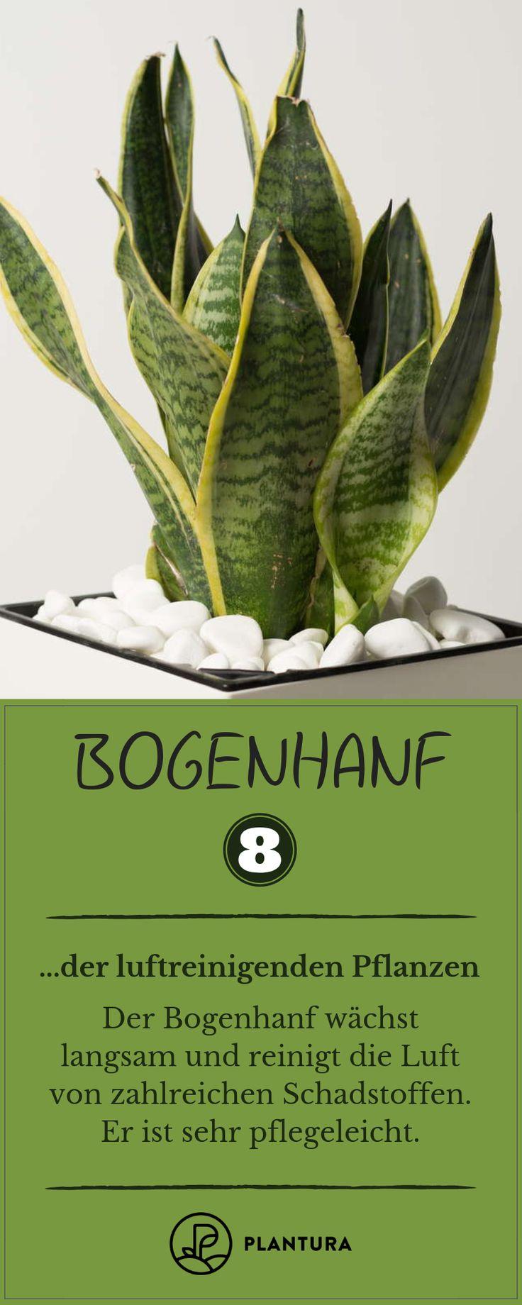 Luftreinigende Pflanzen: Die Top 10 – Plantura | Garten Ideen & Tipps | Gemüse, Obst, Kräuter