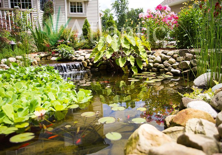 A water garden is the perfect way to create your own for Build your own garden pond