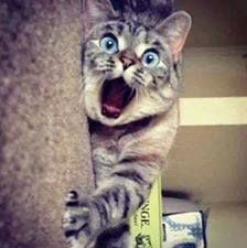 zdziwiony kot