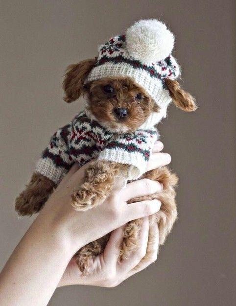 pup #planetblue