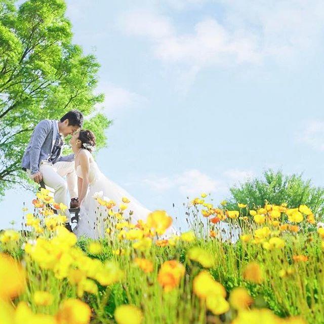 懐かしの前撮り ポピーの花畑に囲まれて  @jadore_wedding  #ウェディングソムリエフォトアワード2017  #ウェディング#ウェディングアンバサダー#1g029 #バレリーナ#プレ花嫁#花嫁#卒花#前撮り#ウェディングフォト#全国のプレ花嫁さんと繋がりたい #夢を叶える #結婚式#ウェディングドレス#verawang#VERAWANG#marry #marry卒花嫁