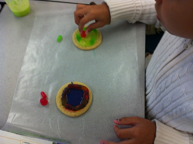 Plant and Animal Cells Activity