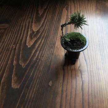 盆栽を飾るのもおすすめ。お年寄りがハマるものというイメージがありますが、小さな鉢の中で育つ植物を自然の風景に見立てる、という日本ならではの繊細な魅力に取り付かれている人も多いようです。