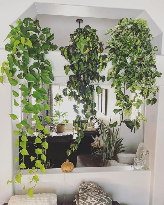 pothos, philodendron brasil To decorate with real plants means to create a li. Room With Plants, House Plants Decor, Ivy Plants, Real Plants, Ivy Plant Indoor, Large Flower Pots, Apartment Plants, Pothos Plant, Plants Are Friends