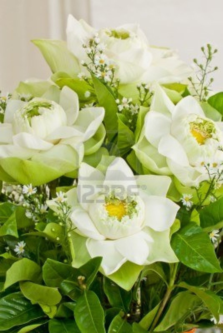 436 best our big day images on pinterest bridal bouquets lotus lotus flowers in the bouquet dhlflorist Images