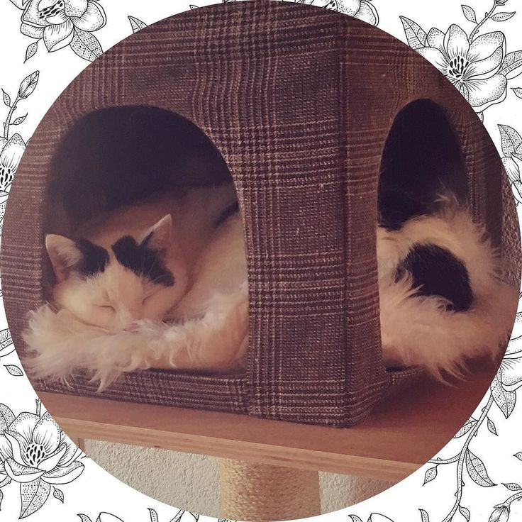 Verliefd  | #love #cat #cats #sweet #dutch #lovecats #cute #cutecat #dutchblogger