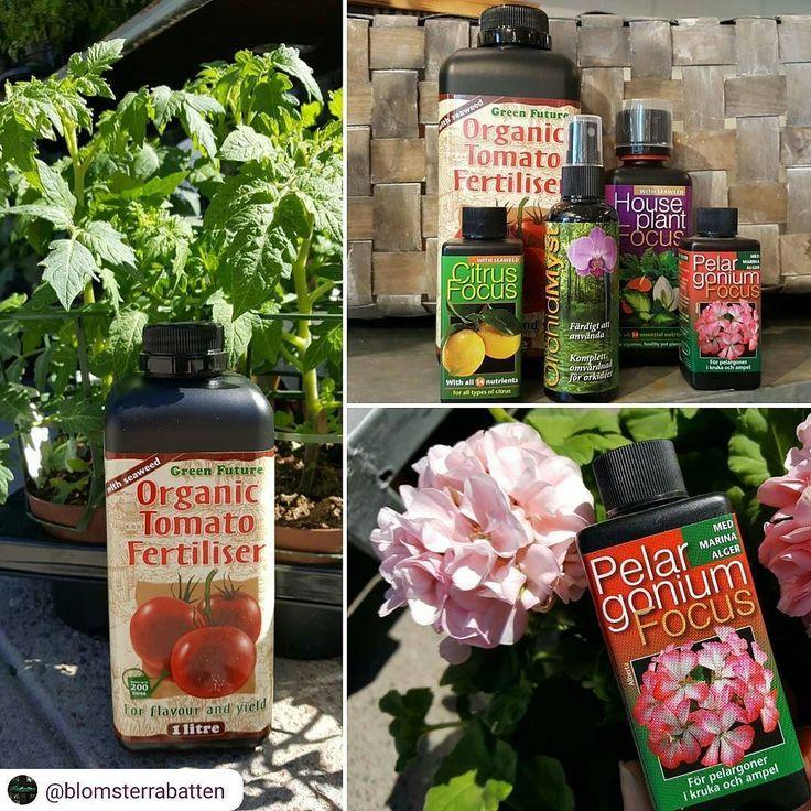 Vi håller helt med @blomsterrabatten   Näring näring näring! Alla växter vill ha näring den här ljusa  årstiden så de orkar växa blomma och bära frukt.. Vi har tagit hem en typ av växtnäring som vi känner är riktigt bra från @wexthuset. Ingen konstgödning bara naturliga ämnen sammansatta på rätt sätt för just den specifika blomman eller plantan. Rätt näring ger lyckliga blommor