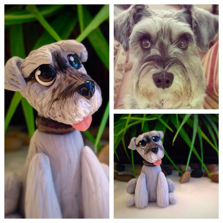 Miniature schnauzer dog figurine handmade from polymer clay by Tempie's Menagerie  https://m.facebook.com/TempiesMenagerie   https://www.etsy.com/shop/TempiesMenagerie   http://instagram.com/tempiesmenagerie/
