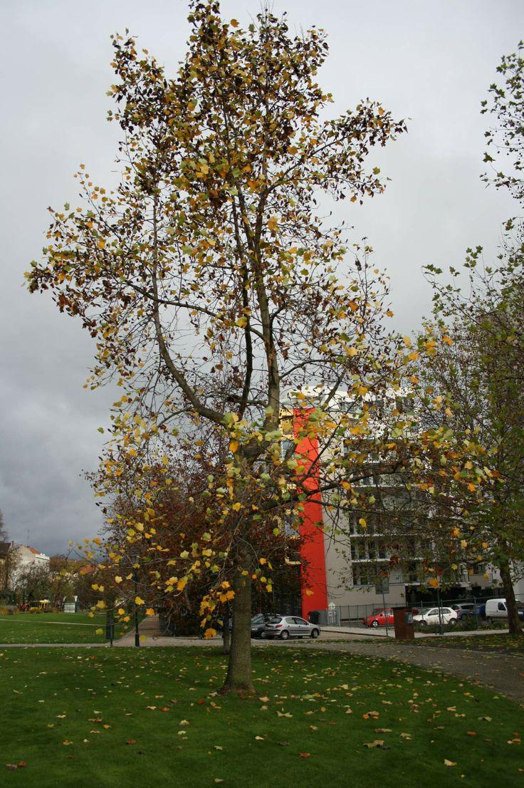 #Nature #Autumn #Pilsen