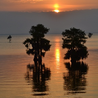15 best images about santee cooper basin on pinterest in for Lake moultrie fishing