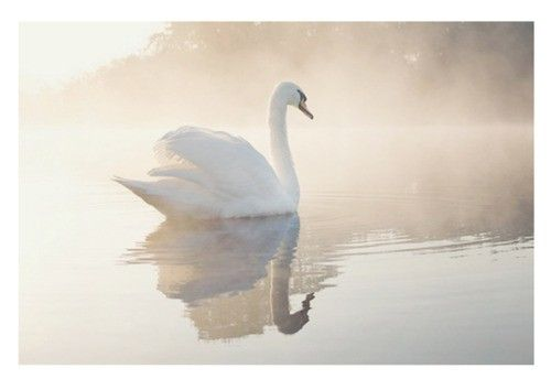 I want a swan or two for guard... Swans. Instead of dogs. Trust me, this'll work. I really thought this through, I swear.
